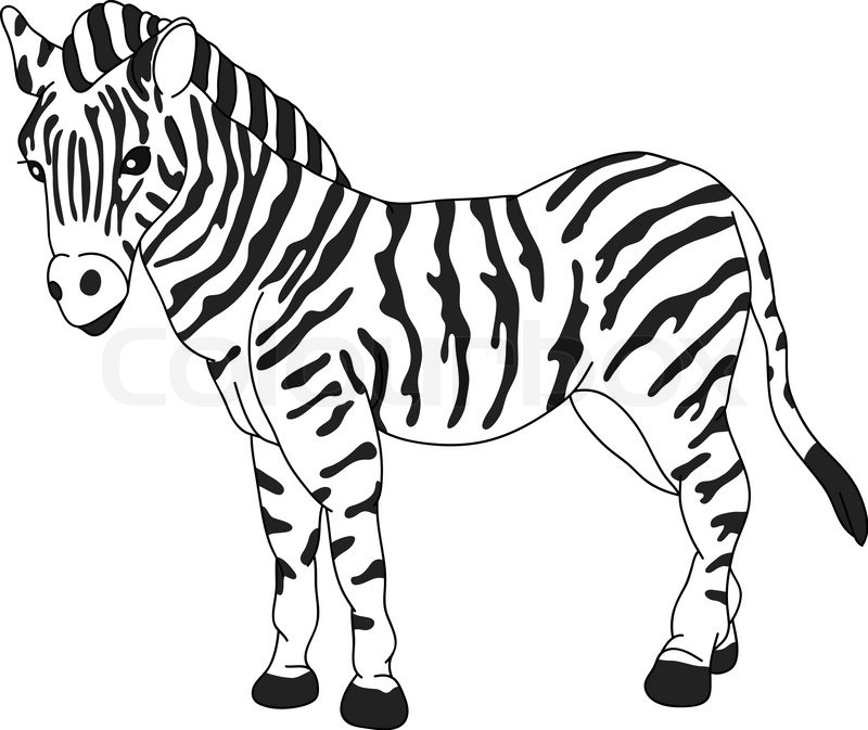 coloring clipart black and white zebra baby zebra clipart clipart best black white clipart coloring zebra and