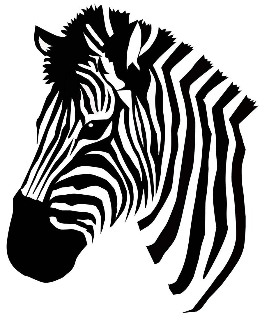 coloring clipart black and white zebra zebra clipart free stock photo public domain pictures zebra white black clipart coloring and