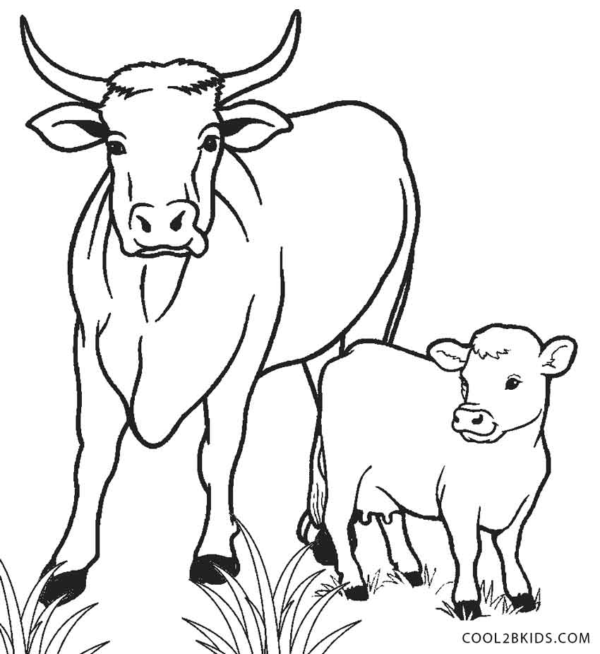 coloring cow drawing easy cow draw clipart best coloring drawing easy cow
