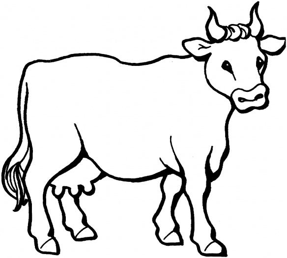 coloring cow drawing easy cow face coloring pages at getcoloringscom free easy coloring drawing cow