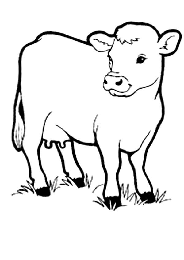 coloring cow drawing easy cow netart coloring cow drawing easy