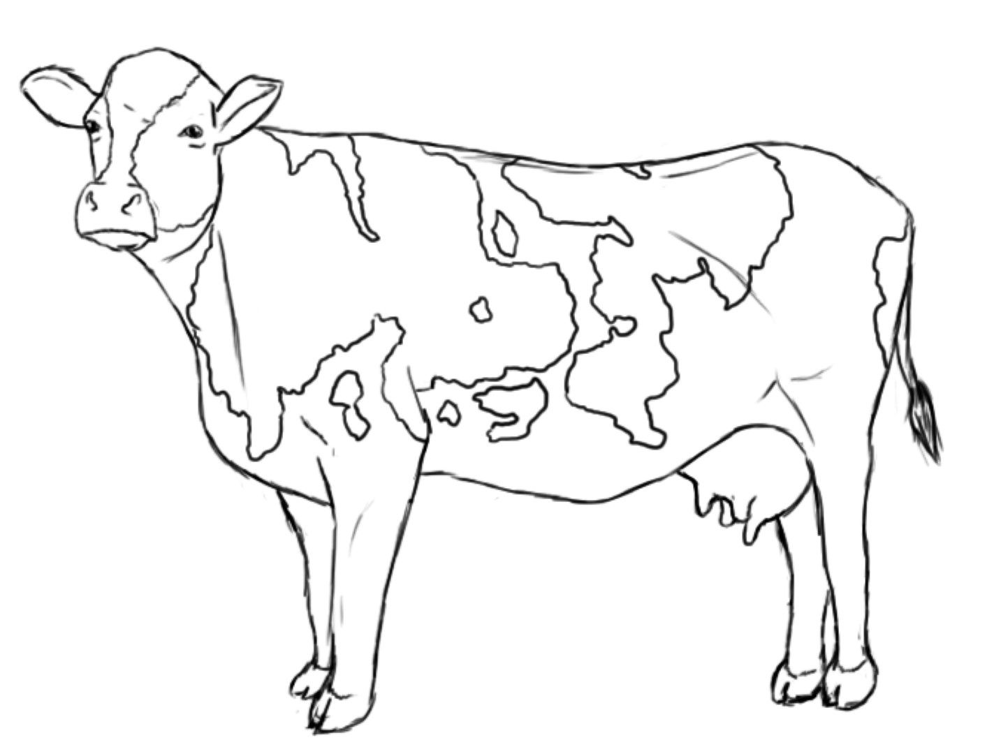 coloring cow drawing easy cute cow animal coloring books for kids drawing cow coloring easy drawing