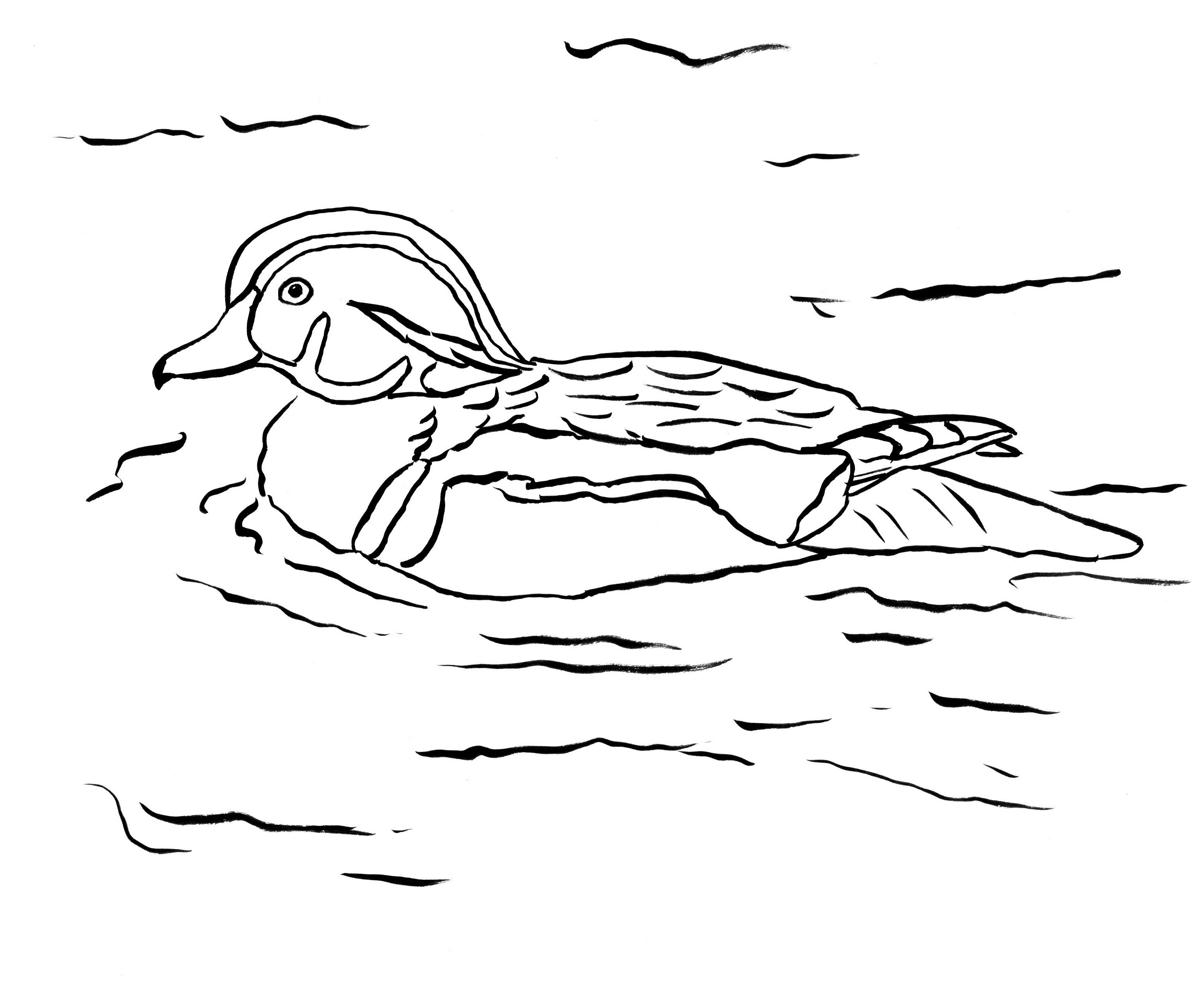 coloring duck clipart outline of a duck free download on clipartmag clipart coloring duck