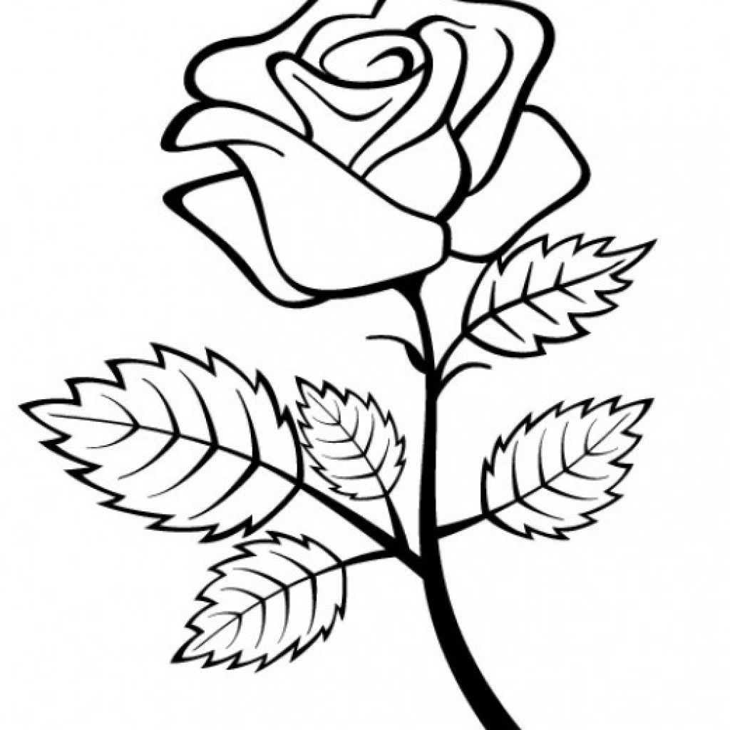 coloring flower clipart black and white download sunflower coloring page 9 buy clip art flower black clipart flower and white coloring