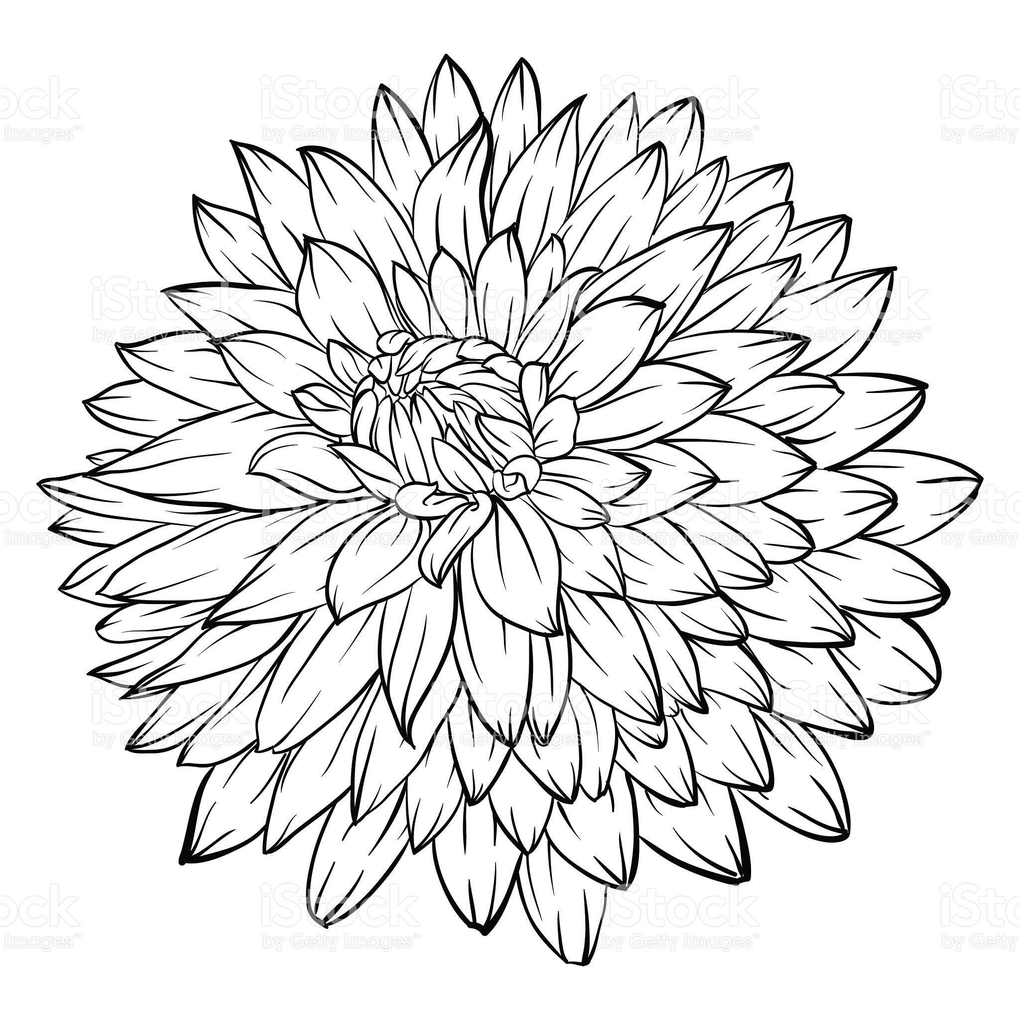 coloring flower clipart black and white free black sunflower cliparts download free clip art black coloring and white flower clipart