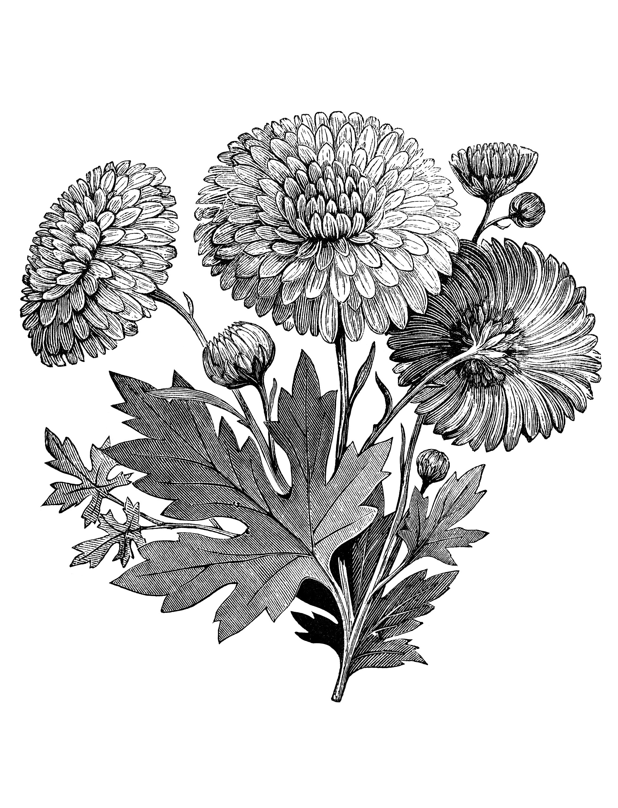 coloring flower clipart black and white spring flowers clipart black and white free download on coloring white black and clipart flower