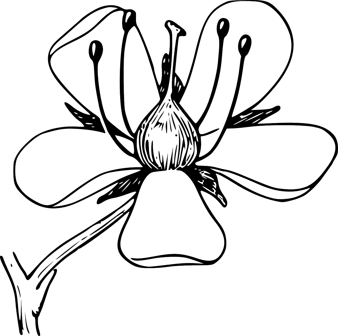 coloring flower png pretty sunflower coloring page free clip art flower png coloring