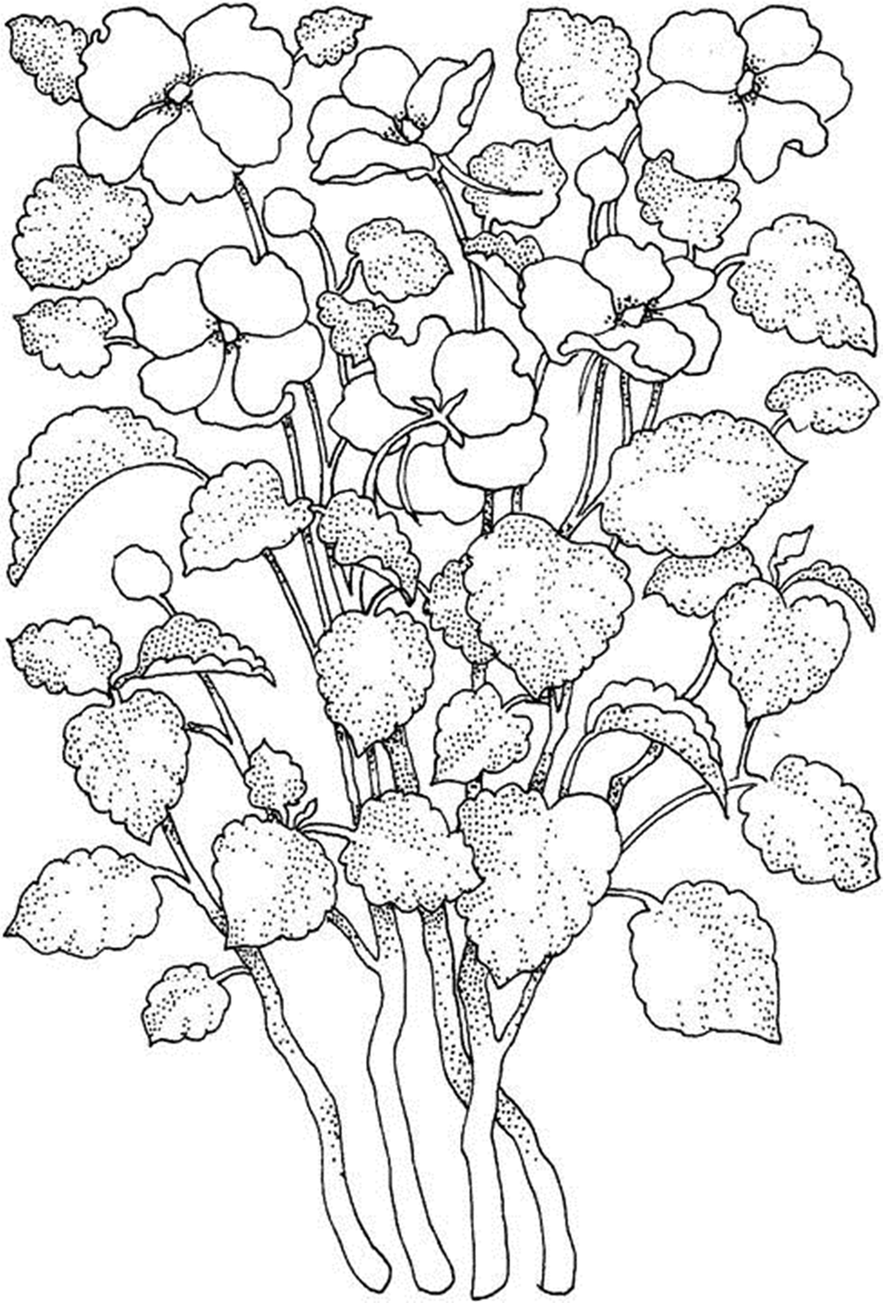 coloring flowers for adults adult flowers coloring page gladiolus the graphics fairy adults for flowers coloring