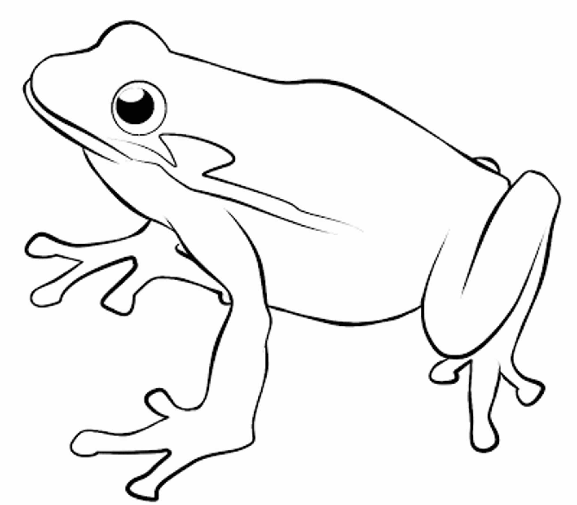 coloring frog outline images outline of a frog clipart best images coloring outline frog