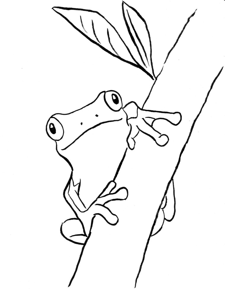 coloring frog outline images tree frog coloring page art starts images outline coloring frog