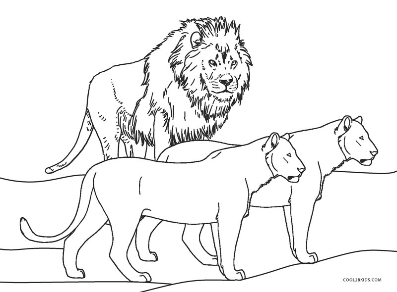 coloring lion pages free printable lion coloring pages for kids coloring lion pages