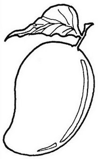 coloring mango clipart mangos colouring pages page 2 coloring home clipart mango coloring