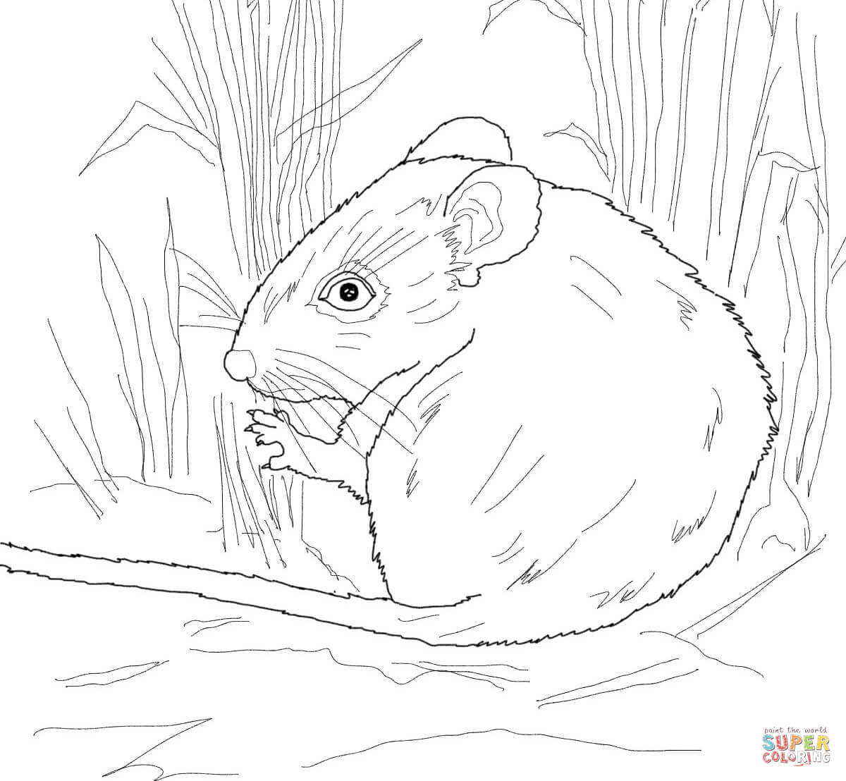 coloring mouse best baby mouse coloring sheet mouse coloring