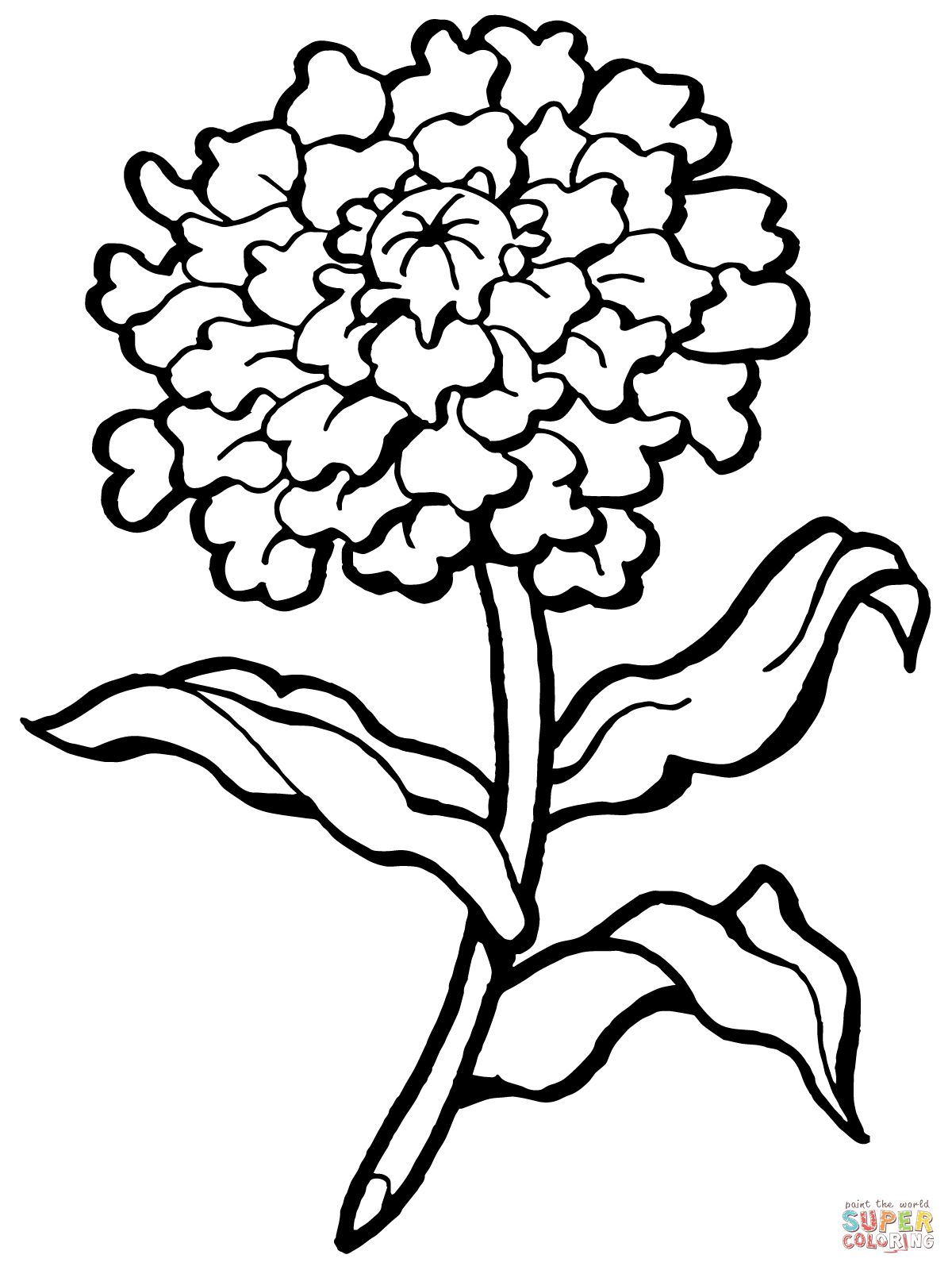 coloring outline images of flowers carnation flower outline marigold flower garden outline flowers of coloring images