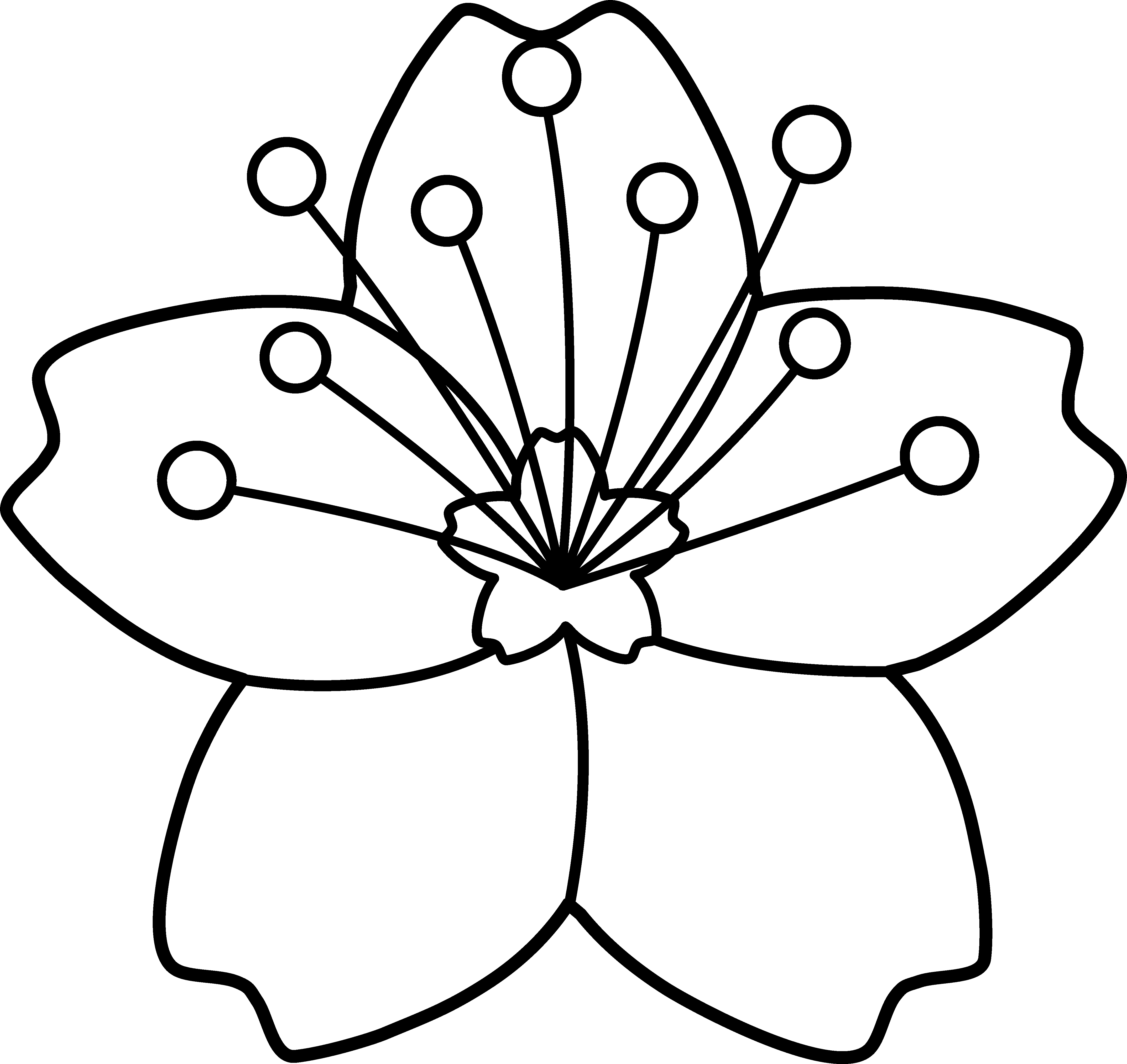 coloring outline images of flowers flower outline pictures clipartsco of coloring images outline flowers