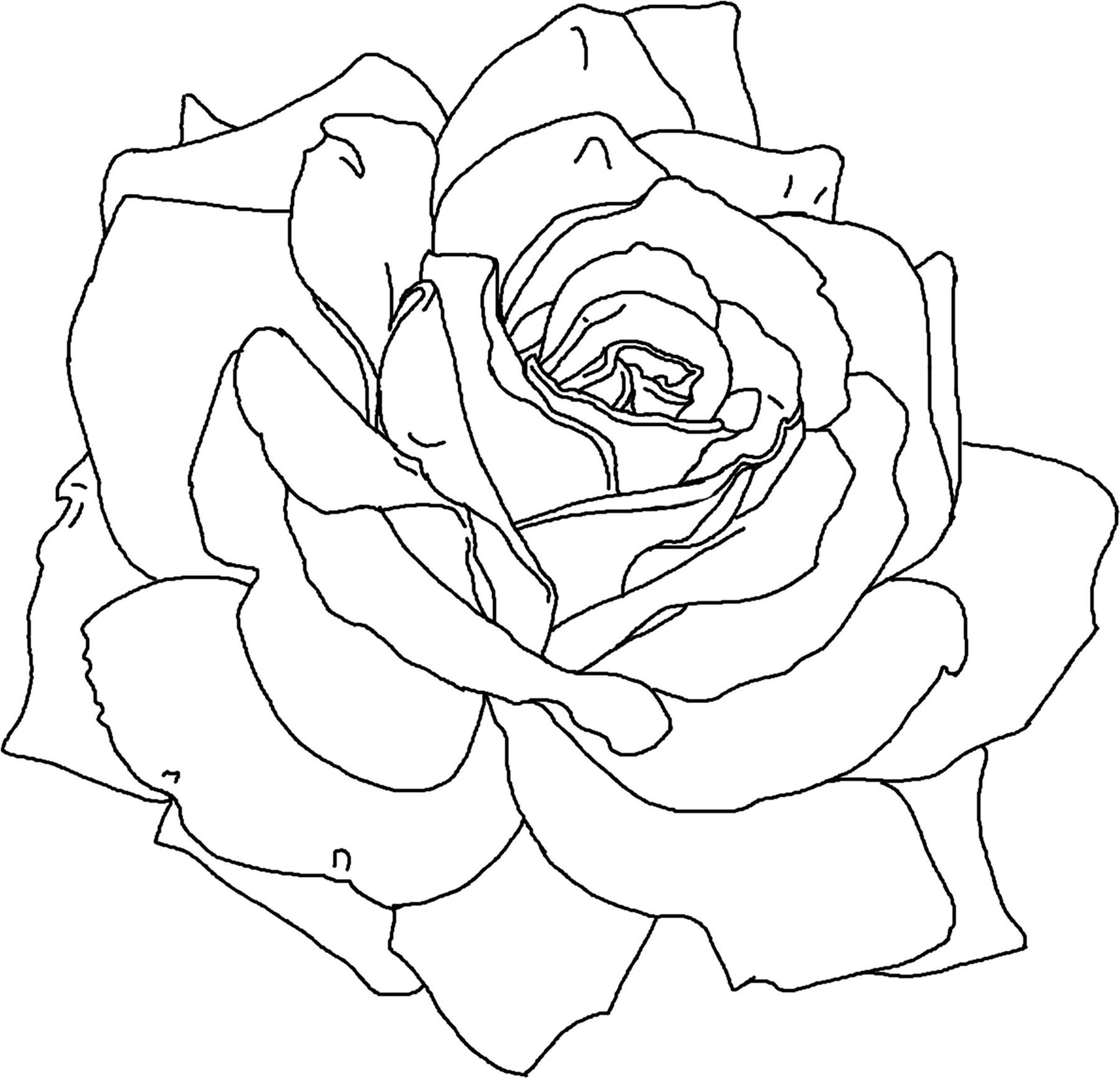 coloring outline images of flowers free printable flower coloring pages for kids best images of coloring flowers outline