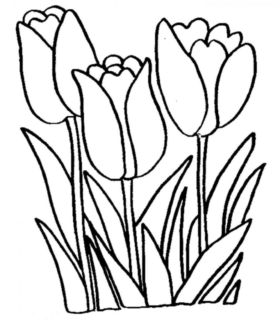coloring outline images of flowers free printable tulip coloring pages for kids images coloring outline of flowers