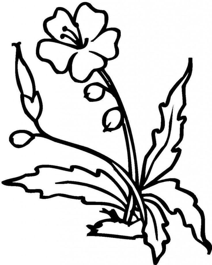 coloring outline images of flowers hawaiian flower outline free download on clipartmag images coloring flowers outline of