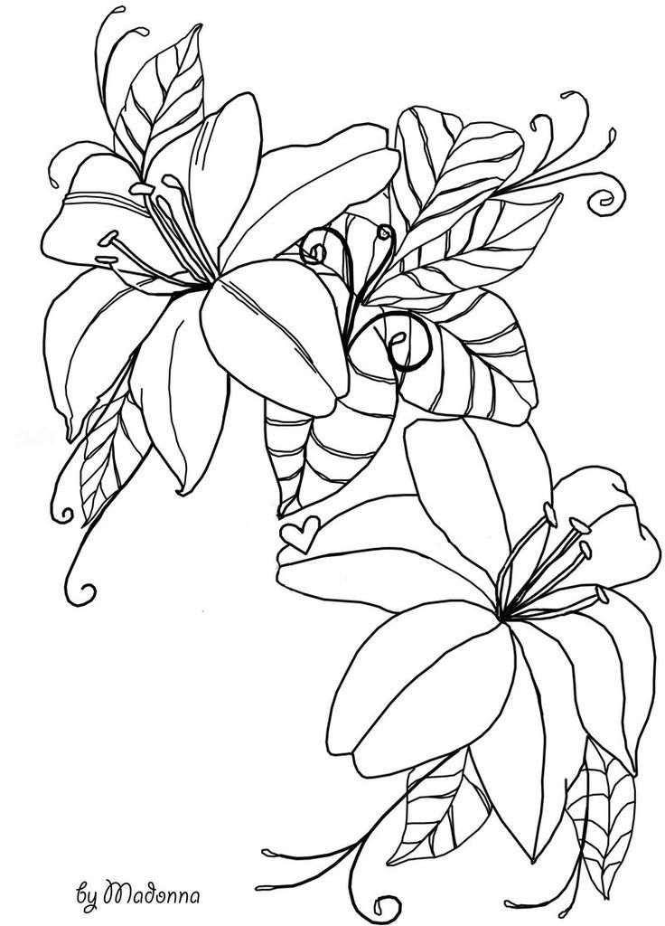 coloring outline images of flowers outlines of flowers coloring home outline of flowers coloring images