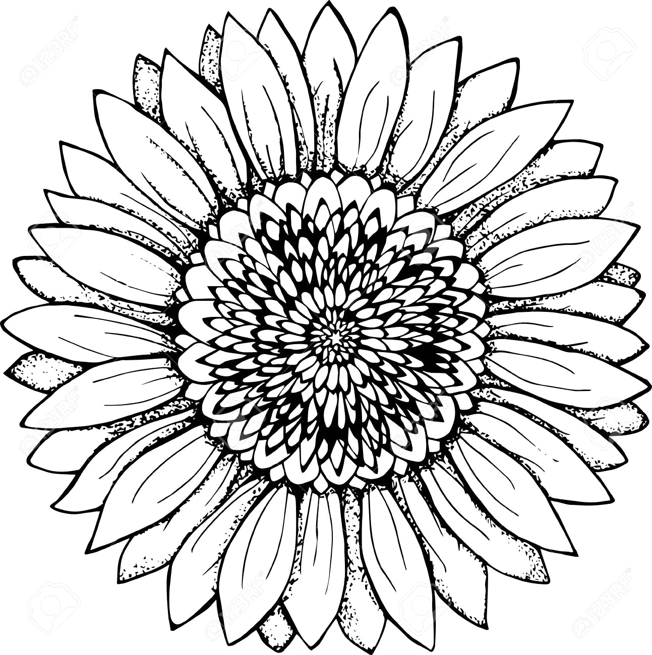 coloring outline images of flowers sunflower outline drawing at paintingvalleycom explore coloring outline of flowers images