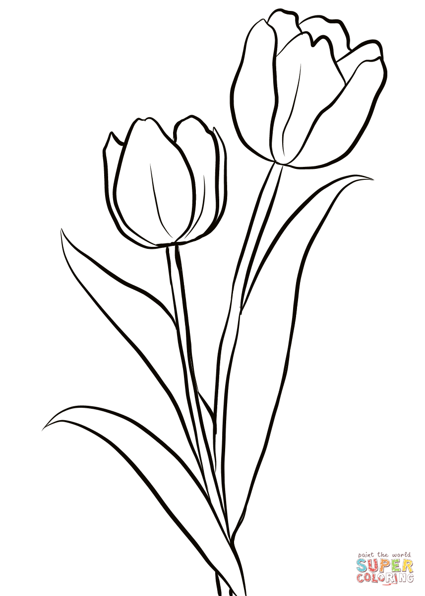 coloring outline images of flowers tulip outline drawing at getdrawings free download of outline flowers coloring images