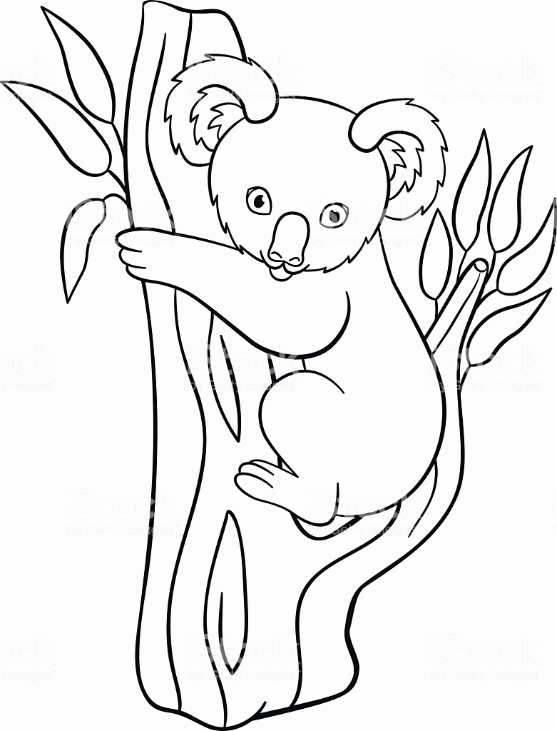 coloring page koala free printable koala coloring pages for kids koala page coloring 1 1