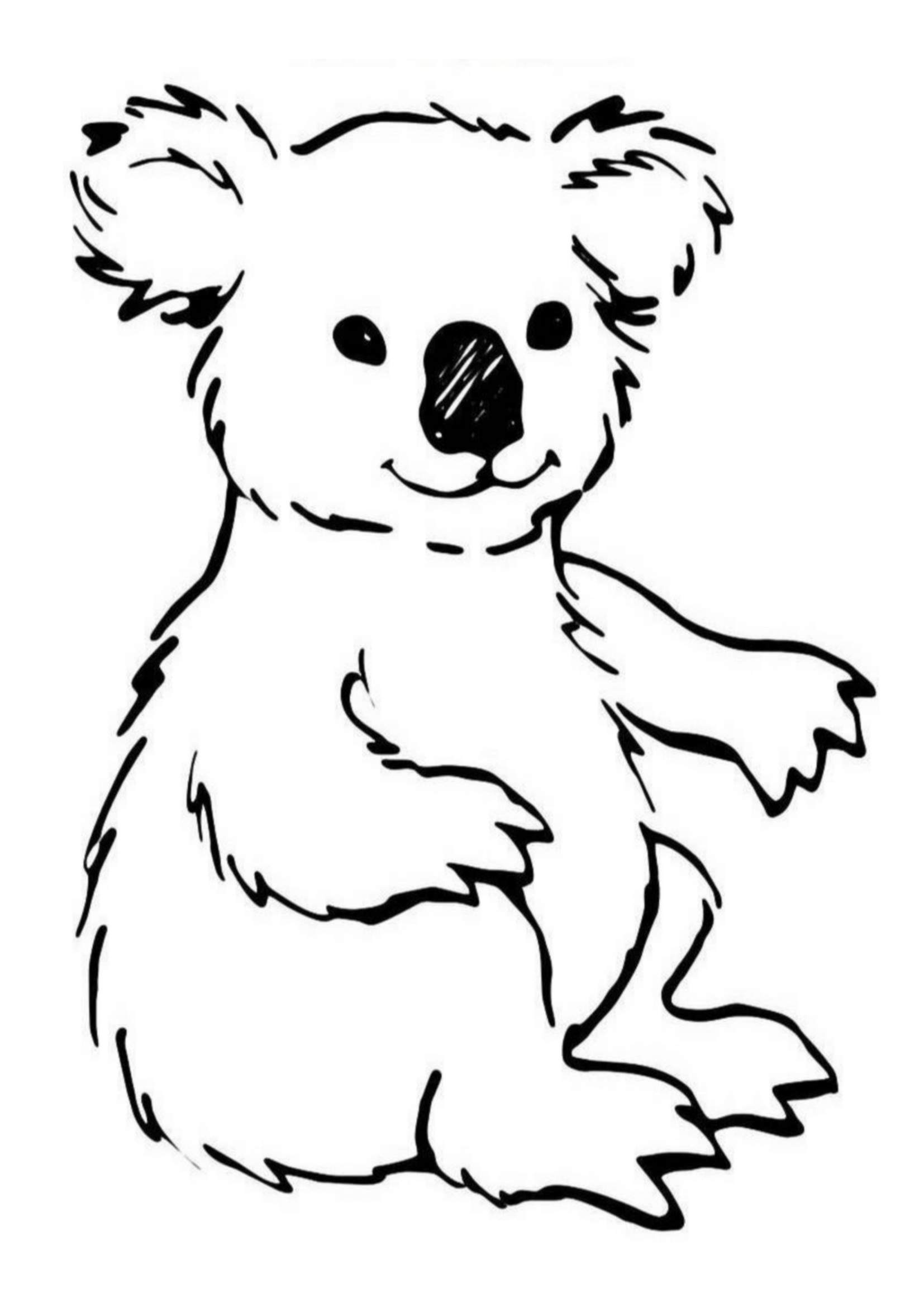 coloring page koala koala coloring pages for kids top 10 koala coloring koala coloring page