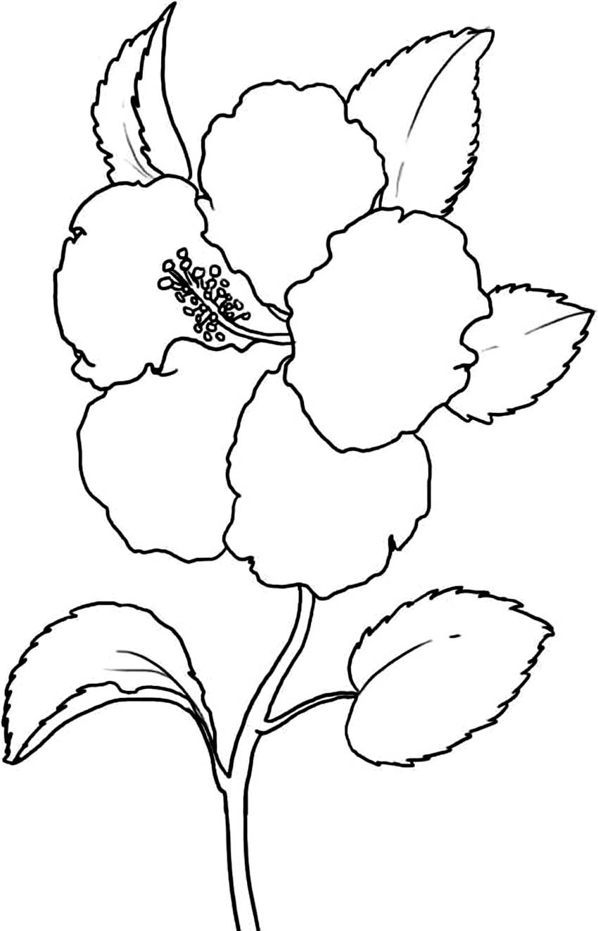 coloring page of a flower flowers coloring pages coloringpages1001com a flower of coloring page