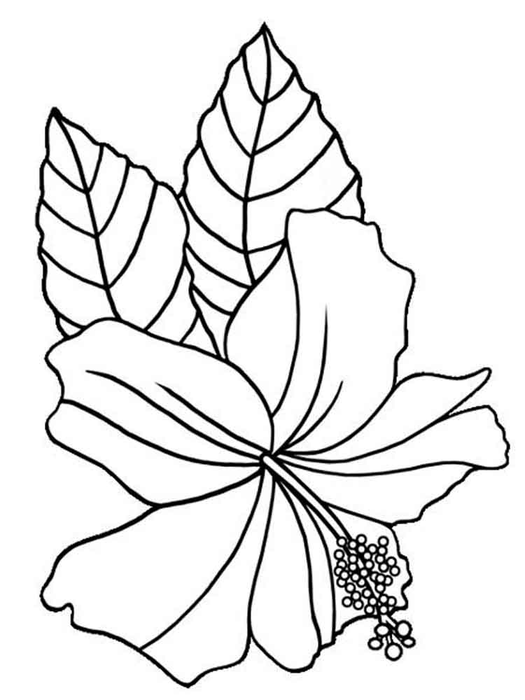 coloring page of a flower free printable hibiscus coloring pages for kids a coloring of flower page