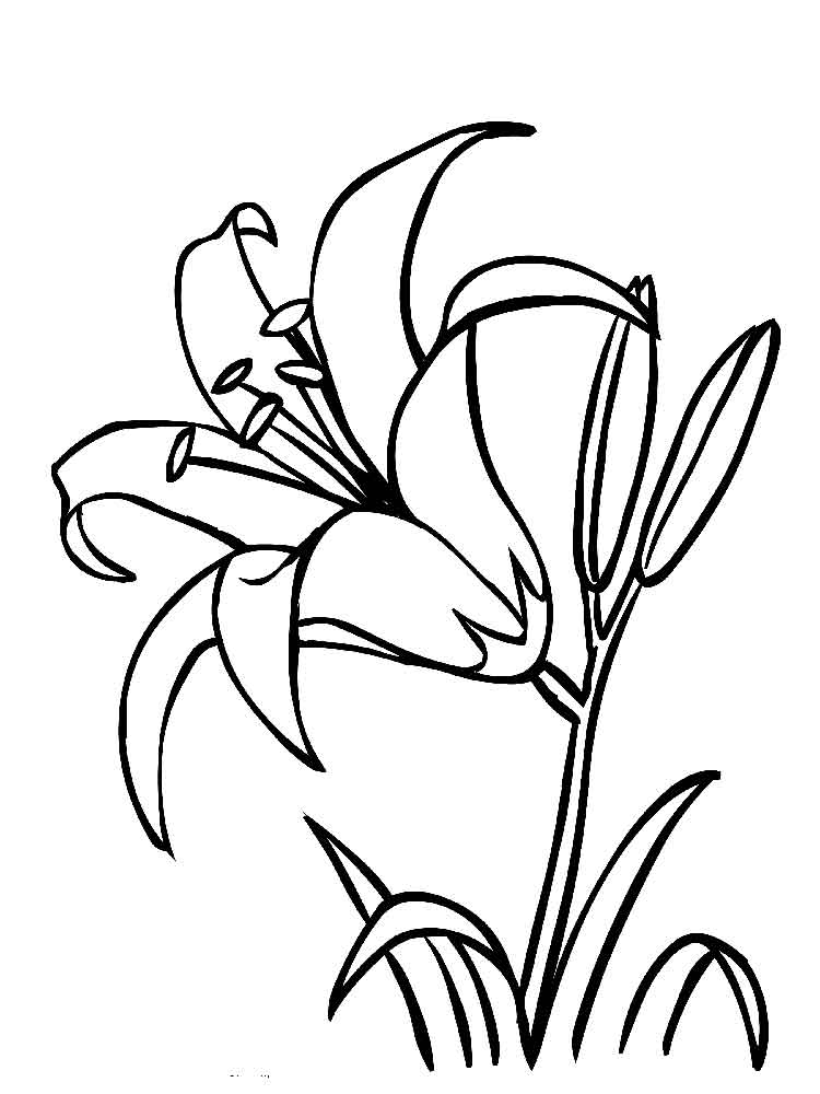 coloring page of a flower lily flower coloring pages download and print lily flower a page coloring of flower