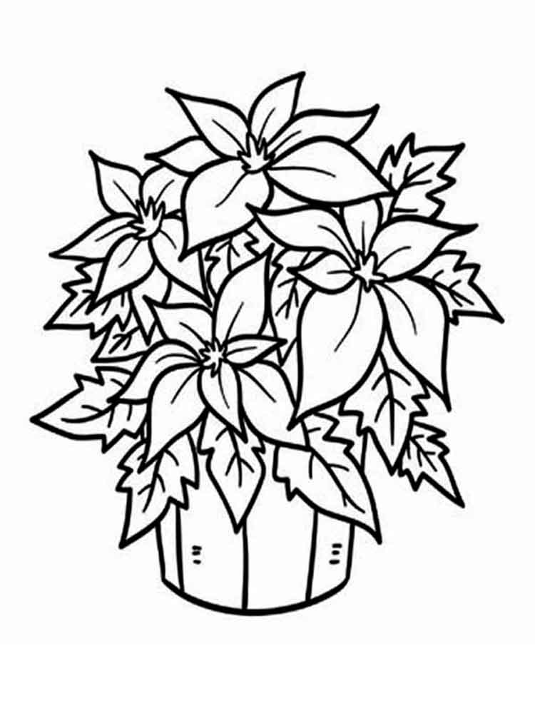 coloring page of a flower poinsettia flower coloring pages download and print coloring flower page a of