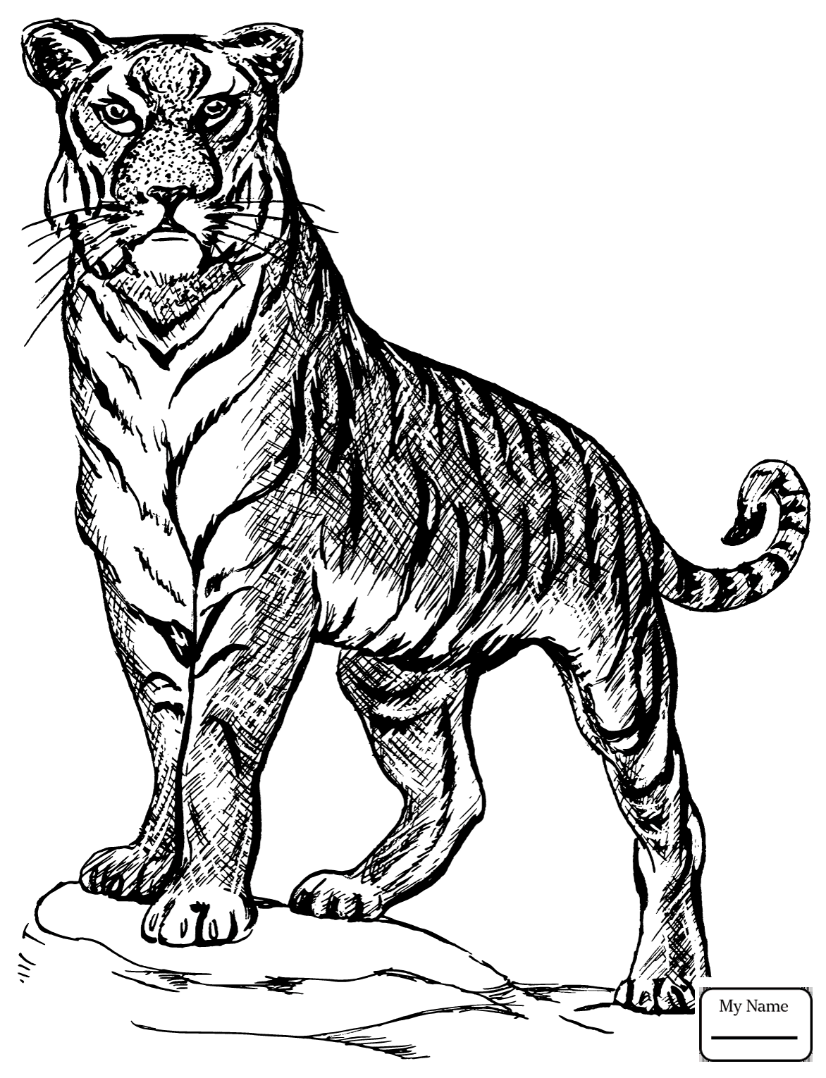 coloring page tiger baby tiger coloring pages to download and print for free tiger page coloring