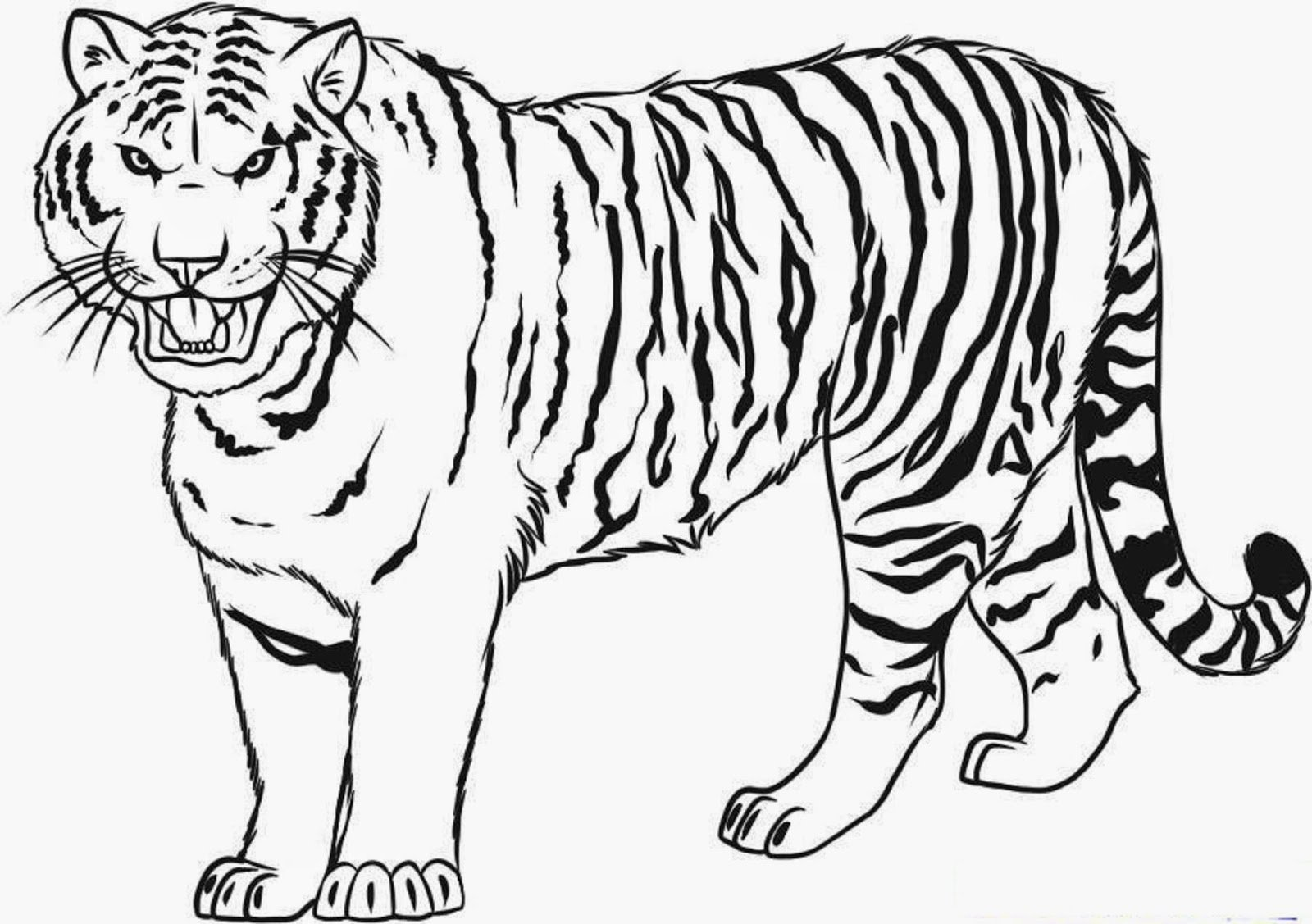 coloring page tiger baby tiger drawing free download on clipartmag coloring tiger page