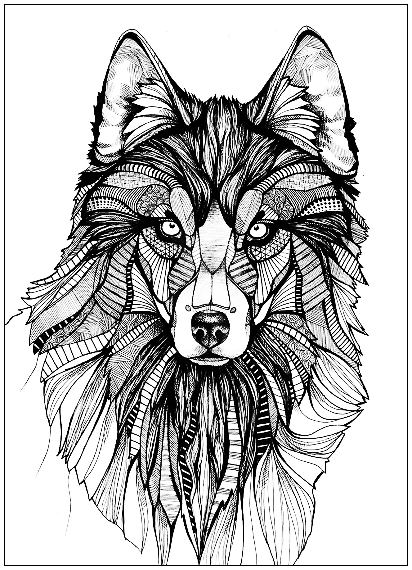 coloring page wolf big wolf head simple wolves adult coloring pages coloring page wolf