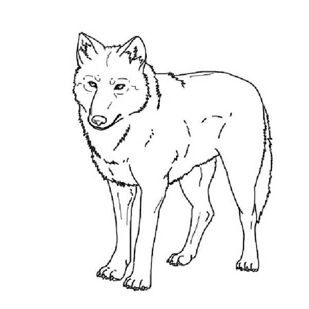 coloring page wolf free printable wolf coloring pages for kids animal place wolf page coloring