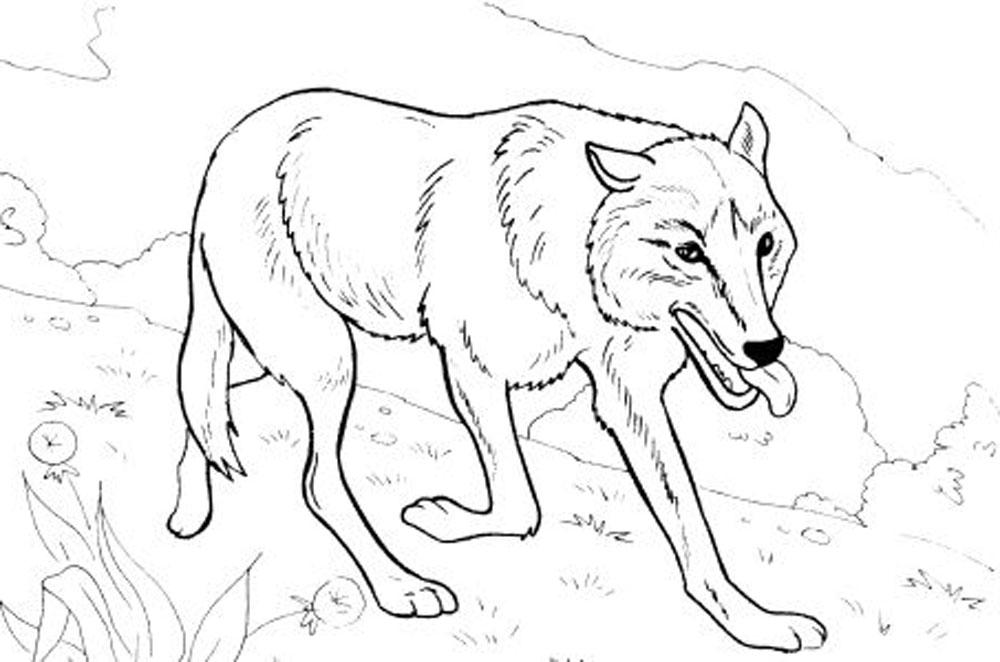 coloring page wolf free wolf coloring pages wolf coloring page 1 1