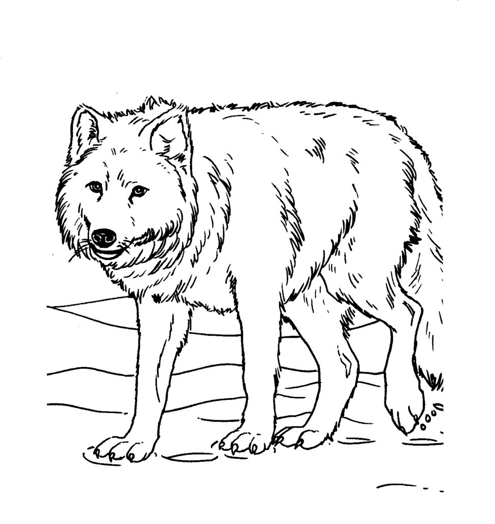 coloring page wolf print download wolf coloring pages theme wolf coloring page 1 1