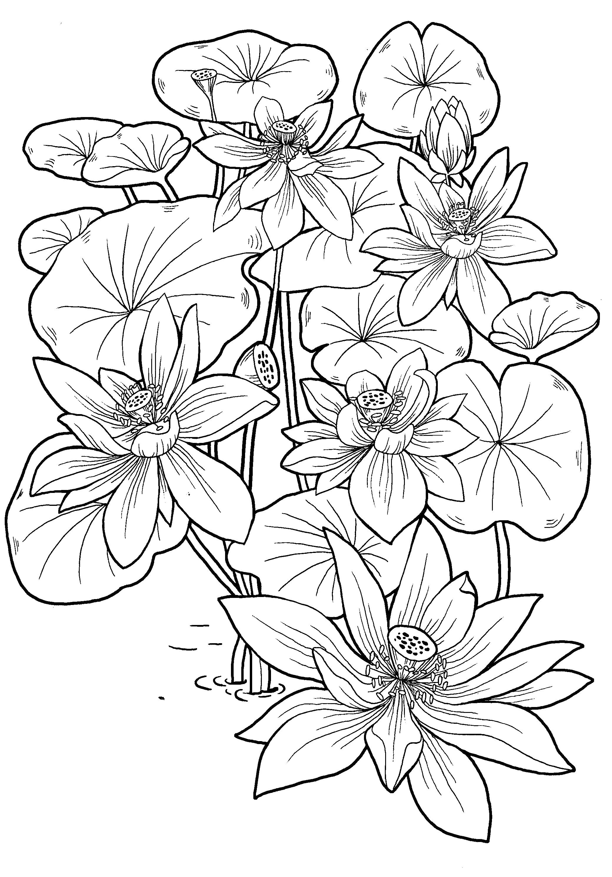 coloring pages 9 year old coloring pages for 8910 year old girls to download and 9 pages year coloring old