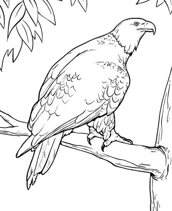 coloring pages eagle bald eagle in the zoo coloring page netart eagle coloring pages