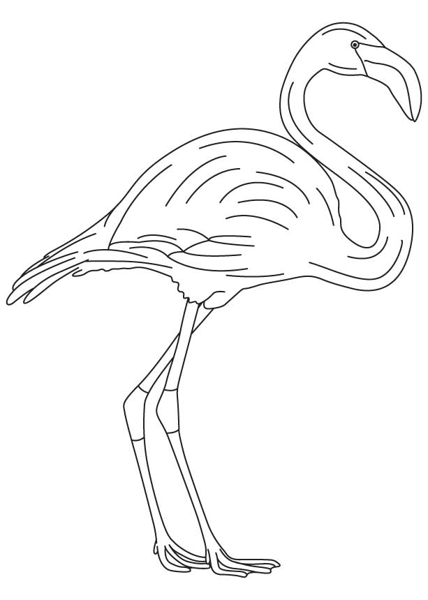 coloring pages flamingo flamingo coloring page coloring home flamingo coloring pages