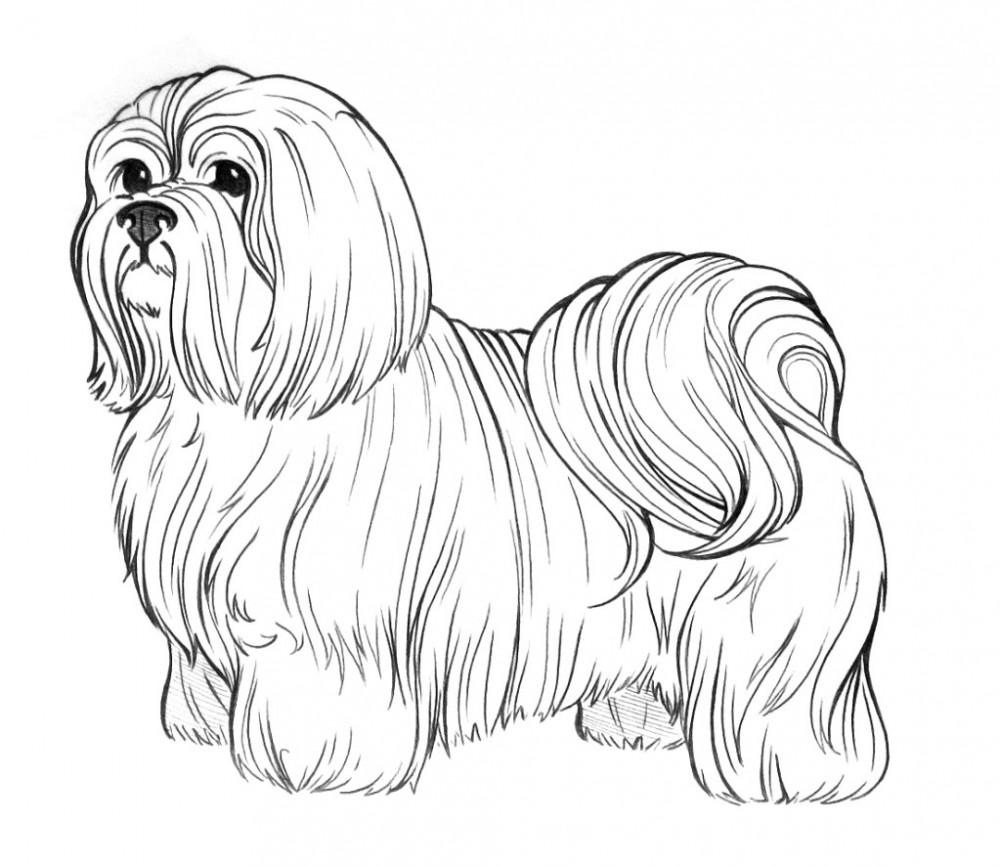 coloring pages for adults dogs 30 free printable puppy coloring pages pages dogs adults for coloring