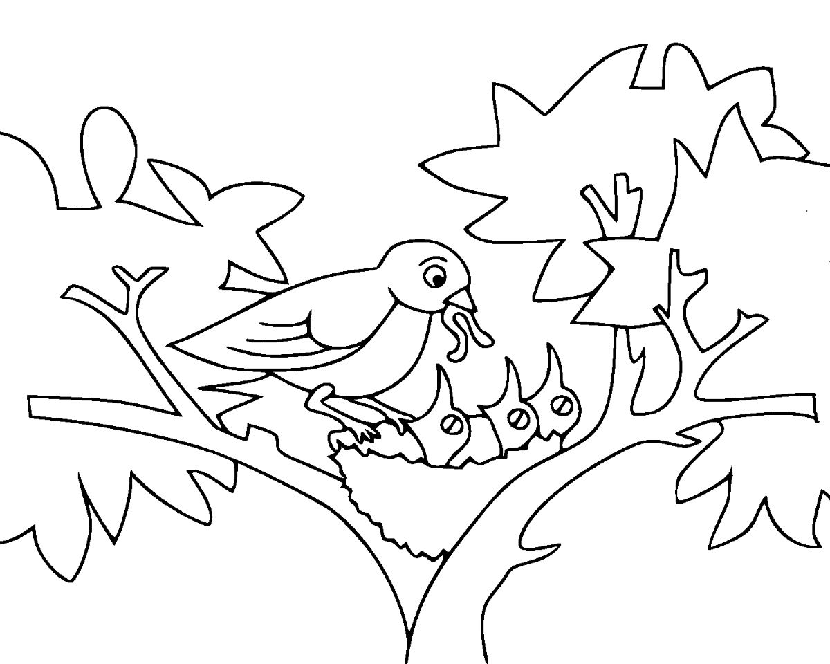 coloring pages for kids birds baby birds coloring page free printable coloring pages kids for birds pages coloring