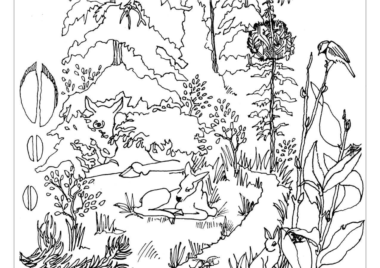 coloring pages forest coloring pages forest forest coloring pages