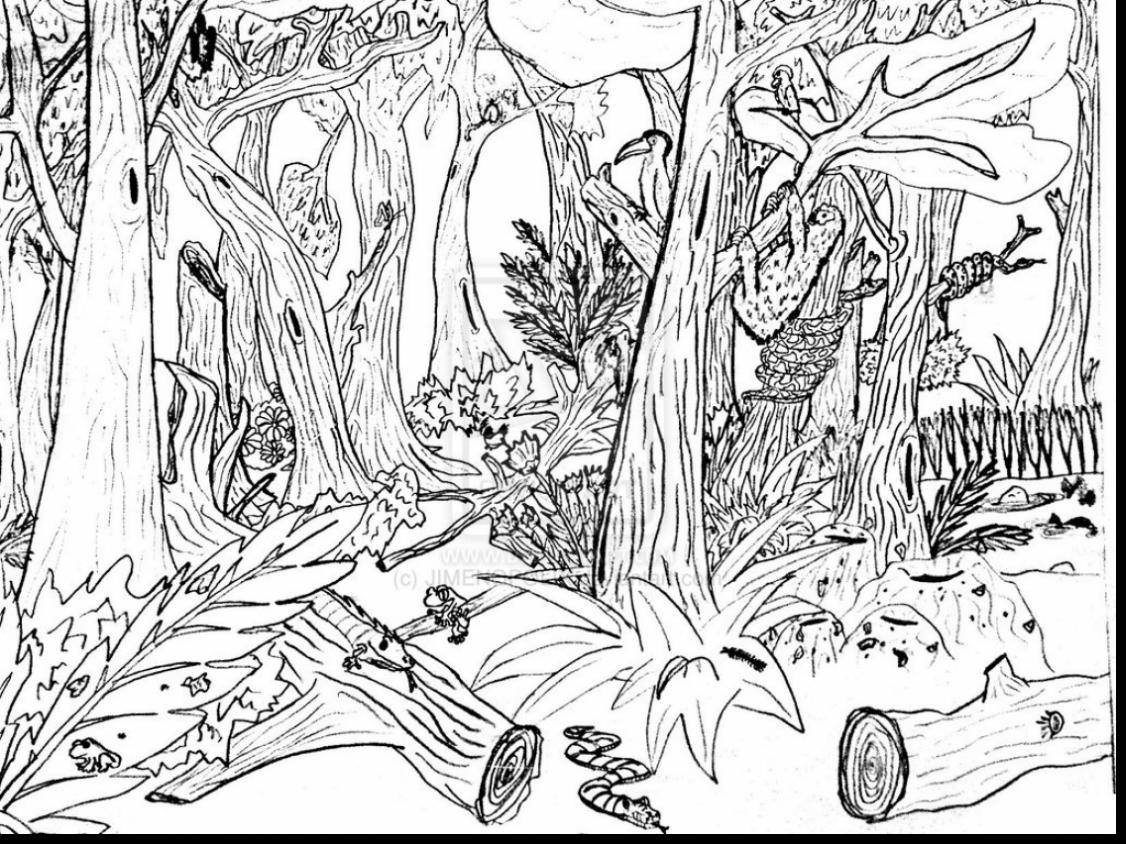 coloring pages forest enchanted forest drawing at getdrawings free download coloring pages forest