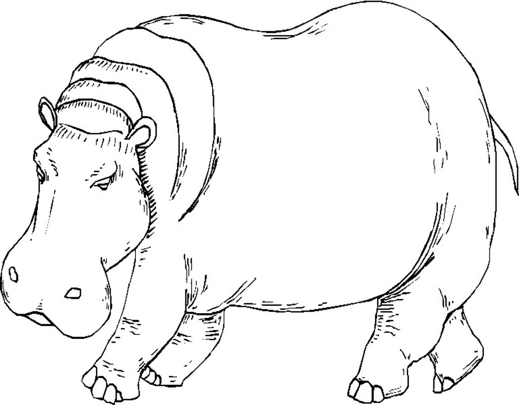 coloring pages hippo cute baby hippo coloring page free printable coloring pages hippo coloring pages
