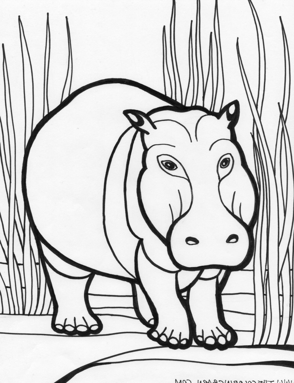 coloring pages hippo hippo coloring pages download coloring hippo pages