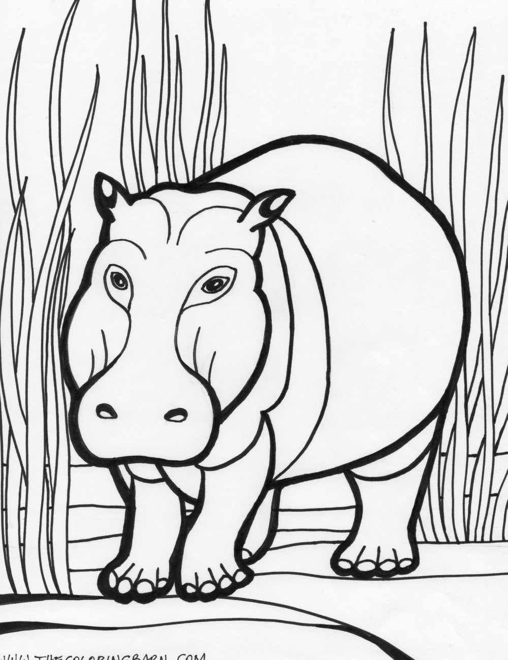 coloring pages hippo hippo coloring pages download hippo pages coloring