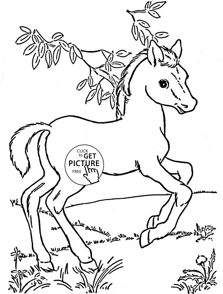 coloring pages of baby horses baby horse coloring page free printable coloring pages baby coloring pages of horses
