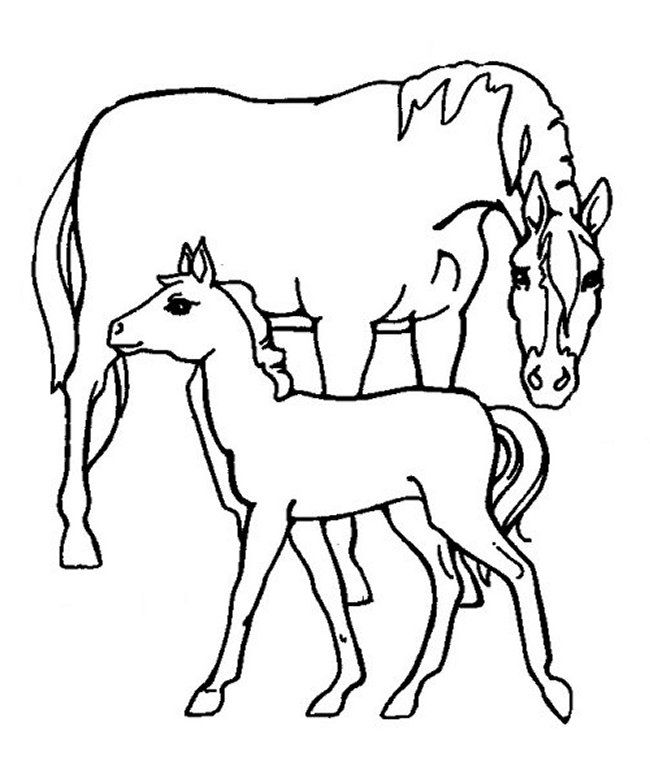 coloring pages of baby horses baby horse pony coloring page for kids for girls coloring pages coloring baby horses of