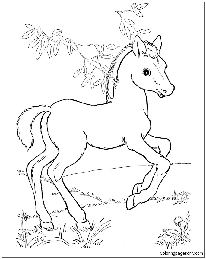 coloring pages of baby horses pony coloring pages coloringrocks coloring horses of baby pages